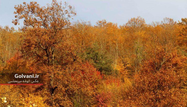 پاییز جنگلهای هیرکانی