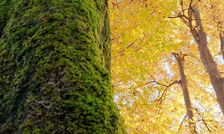 زیبایی پاییز را در بوستان ملت شهر رشت ببینید و لذت ببرید