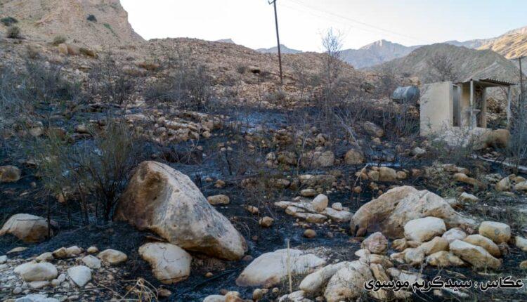 تنگه شيرينه بوشهر آتش گرفت