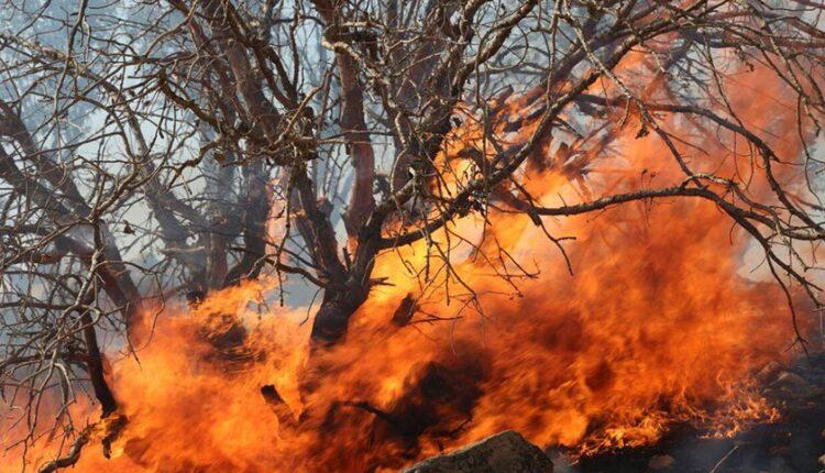 آتش سوزی در جنگل های بلوط باغملک