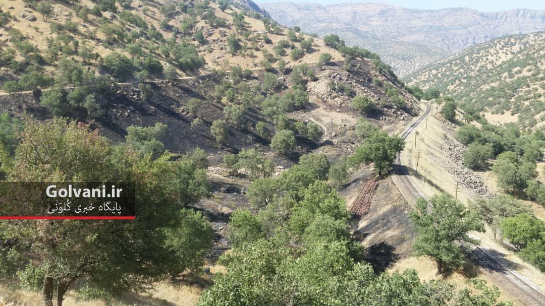 جنگل های لرستان در منطقه سپیددشت