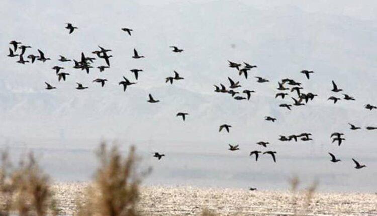 پناهگاه حیات وحش تالاب کجی نمکزار