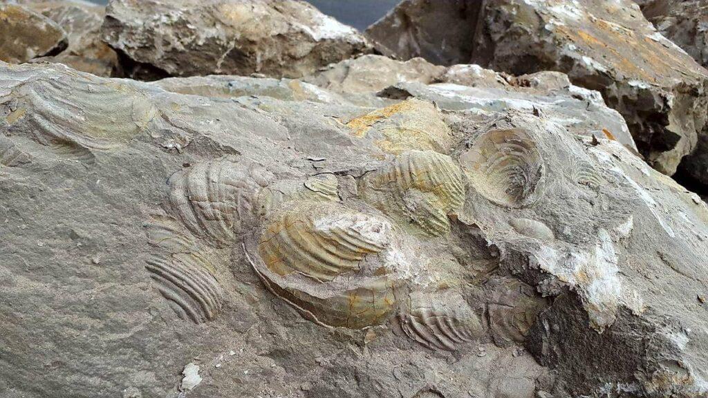 منطقه فسیلی مراغه بهشتی برای دیرینهشناسان با قدمت 7 میلیون سال - گلونی