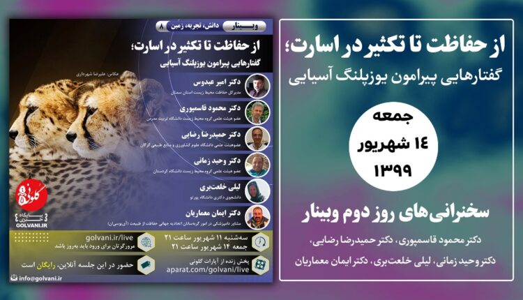 یوزپلنگ ایرانی از حفاظت تا تکثیر در اسارت؛ ۵ کارشناس نظراتشان را بیان کردند