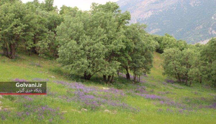 پایداشت جنگل اولین اصل پرورش جنگل