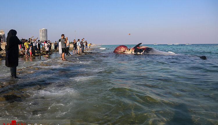 نهنگ براید