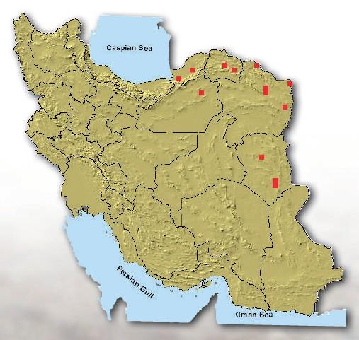 زیستگاه، پراکندگی و فراوانی ول حفار افغانی