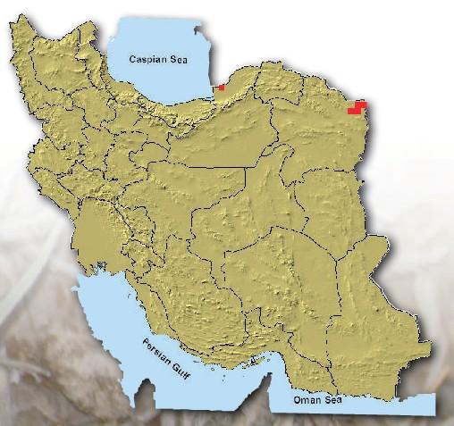 زیستگاه، پراکندگی و فراوانی ول حفار ترکمنی