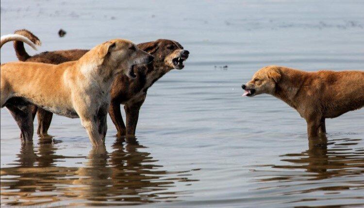 غذارسانی به سگ های ولگرد چرا غلط است.