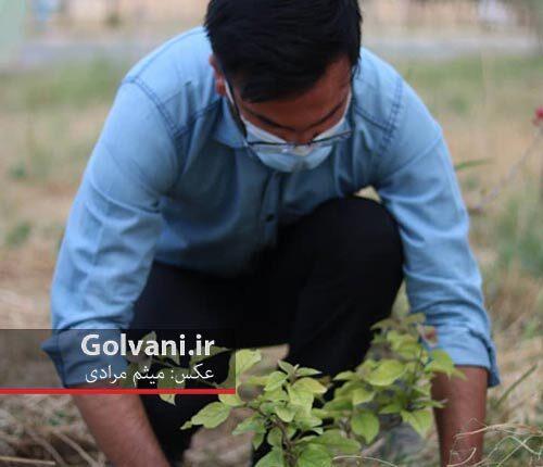 کاشت ۵۰ اصله نهال گل کاغدی در اندیمشک