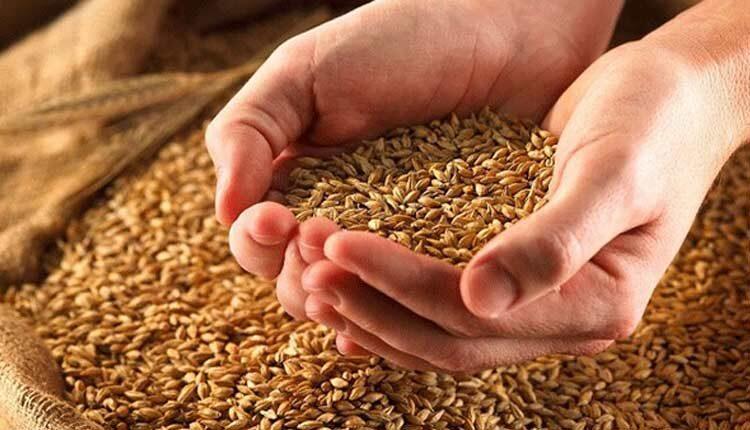 قیمت گندم دو برابر شد زنگ خطر گرانی نان به صدا درآمد