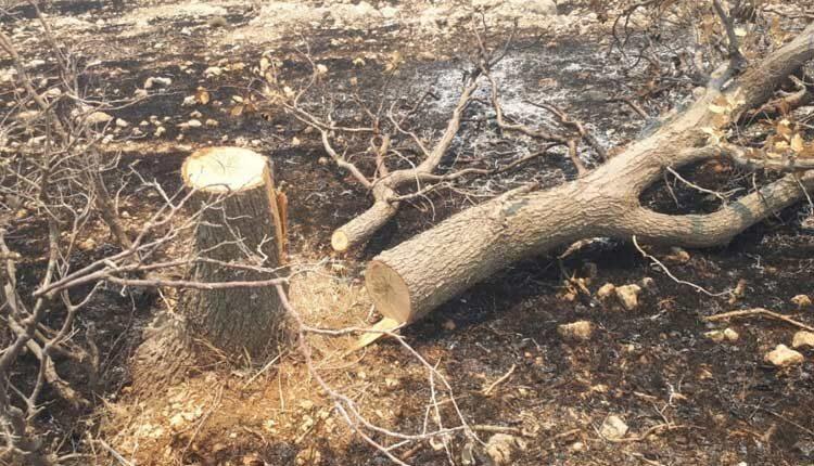 آتش سوزی کوه حاتم بر اثر فعالیت کوره های زغال سنگ