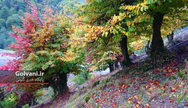 زمزمه بلوط و انجیلی در خلوت طبیعت