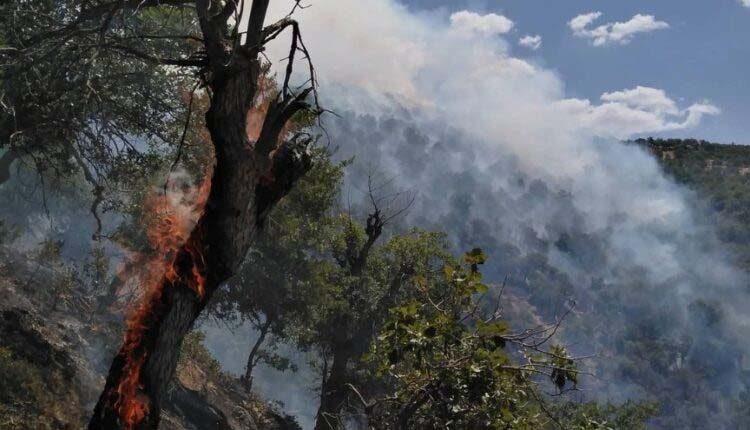بررسی کاهش ارزش محافظتی جنگل بر اثر آتش سوزی