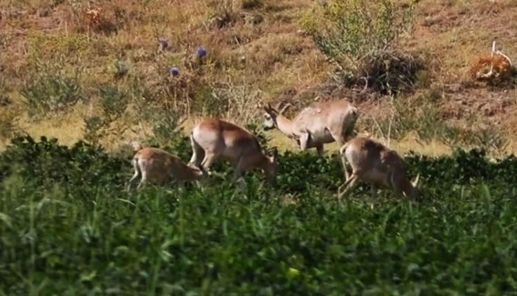 میزبانی کشاورزان شهرستان ازنا از حیات وحش