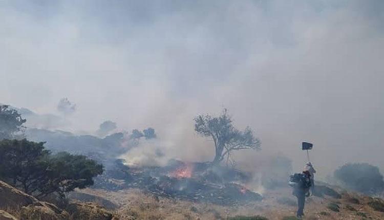 آتش چگونه و در چه حرارتی درختان را از بین میبرد؟