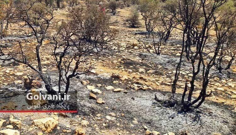 بررسی و ارزیابی خسارت آتش به جنگل ها
