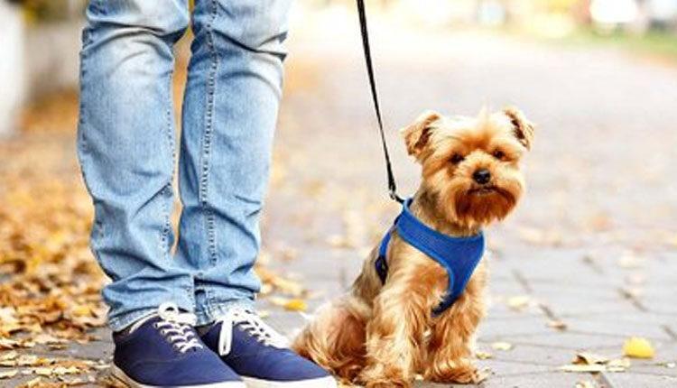 ۲۰۰ هزار نفر خواستار توقف طرح های مقابله با سگ گردانی شدند