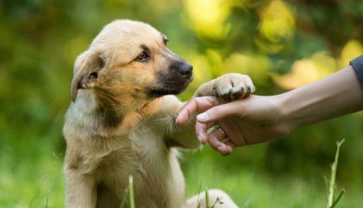 تعبیر خواب سگ؛ یک مهربان باهوش ولی خنگ