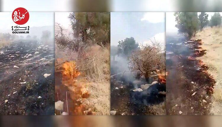 ۱۳ شهریور روز بدی برای جنگل های فارس بود