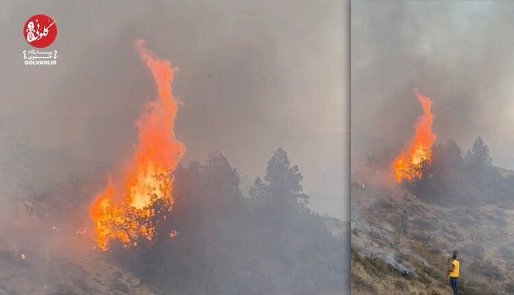۸۰ درصد آتش سوزی جنگل کردکوی مهار شد